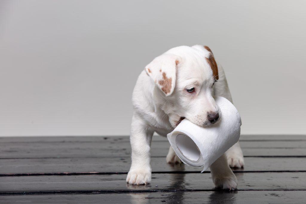 Hund Durchfall: Hund mit Toilettenpapier