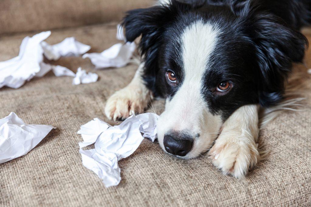 Hund Verstopfung: Trauriger Hund