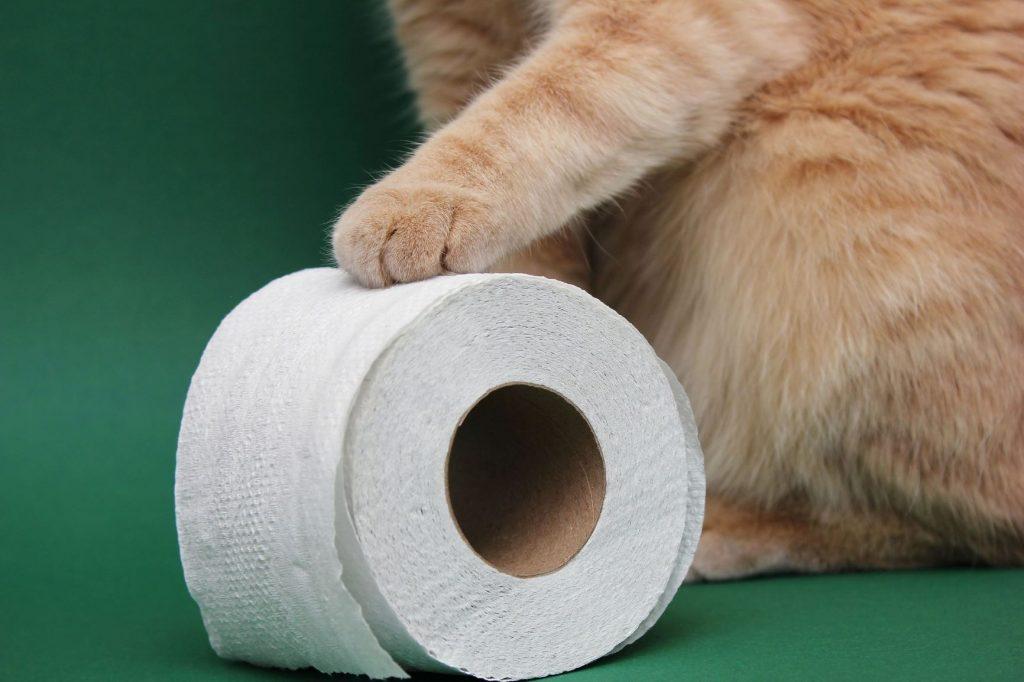 Katze Durchfall: Katzenpfote auf Klopapierrolle