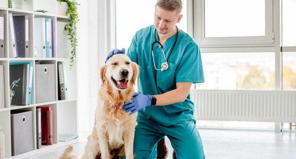 Kastration Hund - Vorbereitung auf den Eingriff