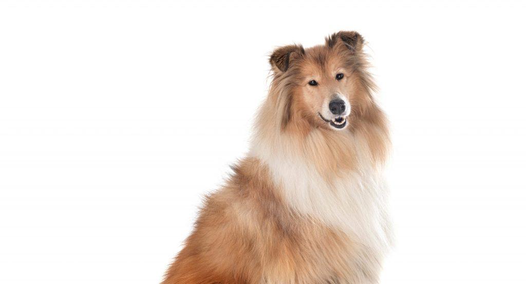 Hund mit guter Fellpflege